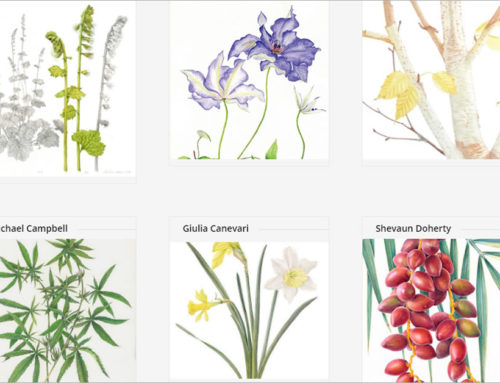 Irish Society of Botanical Artists